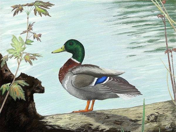 Digital Art - Mallard 2010 by Troy Stapek