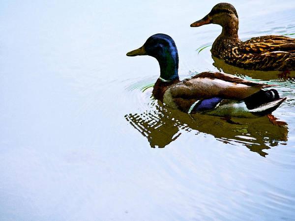 Photograph - Mallard Couple by Jim DeLillo