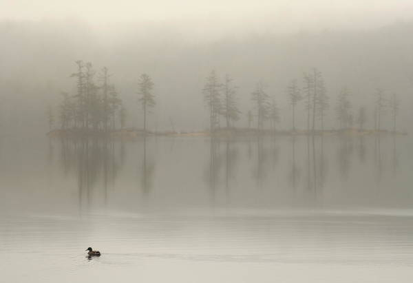 Wall Art - Photograph - Mallard Duck And Foggy Lake by John Burk