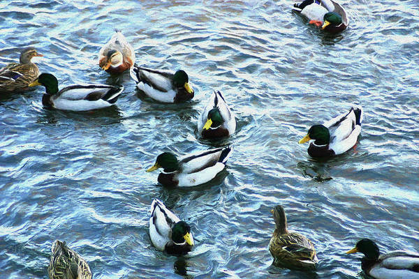 Photograph - Mallard Family Painted 0017 by Ericamaxine Price