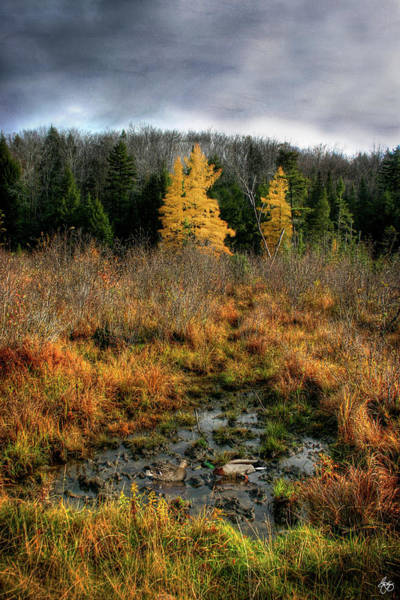 Photograph - Love In A Larch Wallow by Wayne King
