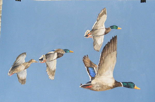 Mallards Number Five Art Print