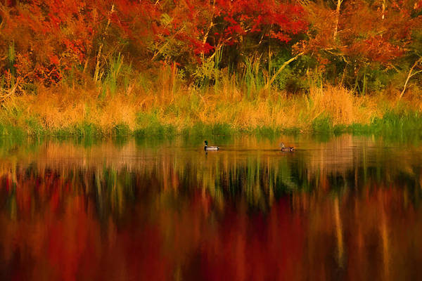 Photograph - Mallards Through Reflection Of  Fall Colors by Jeff Folger
