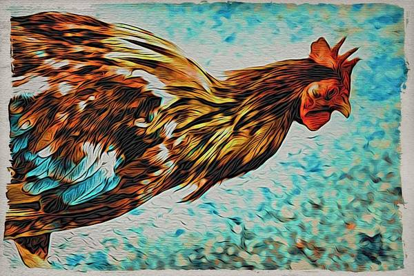 Photograph - Mallory Square Chicken by Alice Gipson
