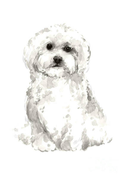 Wall Art - Painting - Maltese Abstract Dog Poster by Joanna Szmerdt