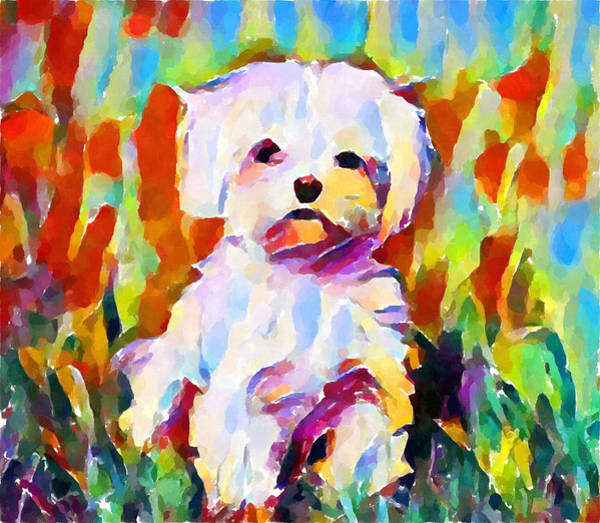 Wall Art - Painting - Maltese by Chris Butler