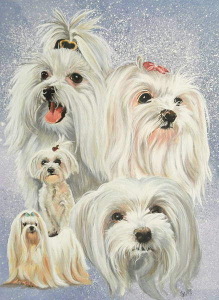Painting - Maltese Collage by Barbara Keith