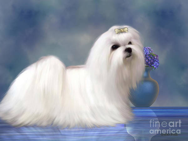 Mutt Painting - Maltese Dog by Corey Ford
