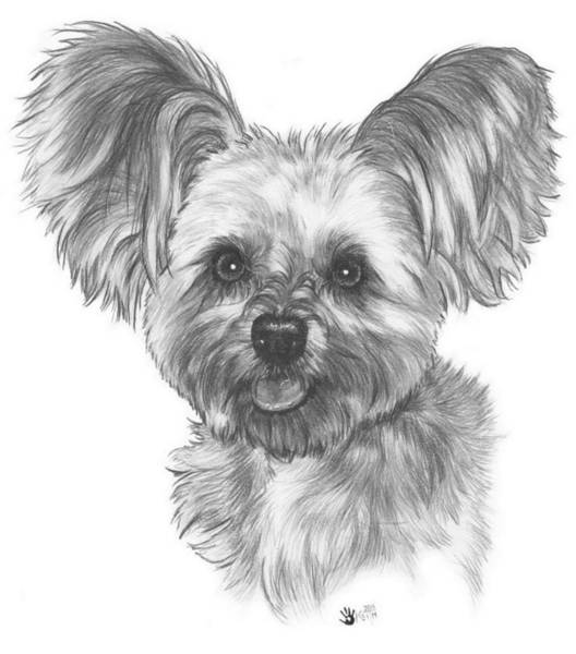 Mutt Drawing - Malti-pom by Barbara Keith