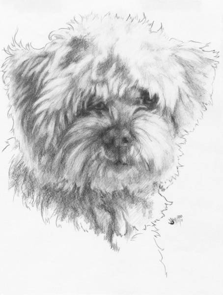 Mutt Drawing - Malti-poo by Barbara Keith