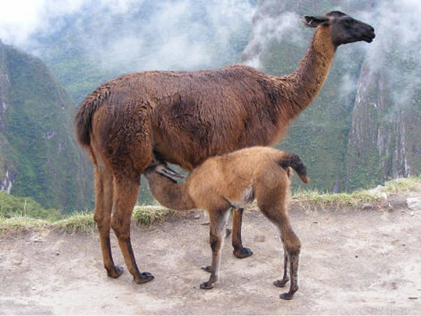 Peru Photograph - Mama And Baby by Marsha Elliott