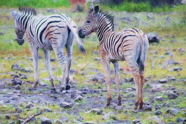 Painting - Mama And Baby Zebra - Painted by Ericamaxine Price