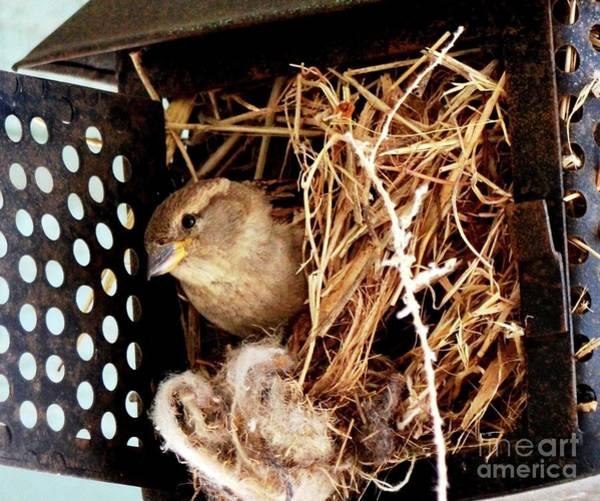 Photograph - Mama Bird by Cindy Schneider