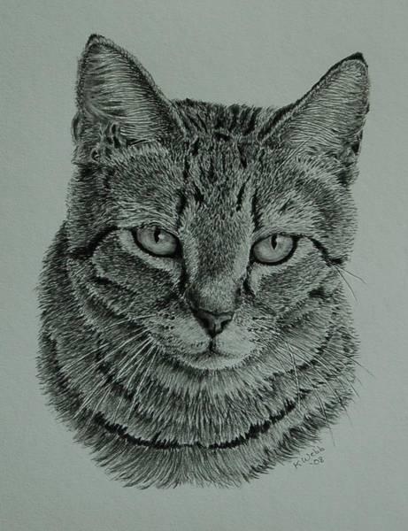 Wall Art - Drawing - Mama Cat by Keith Webb