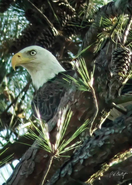 Lowcountry Digital Art - Mama Eagle  by Phill Doherty