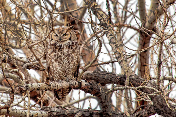 Wall Art - Photograph - Mama Owl In Camo by Dawn Key