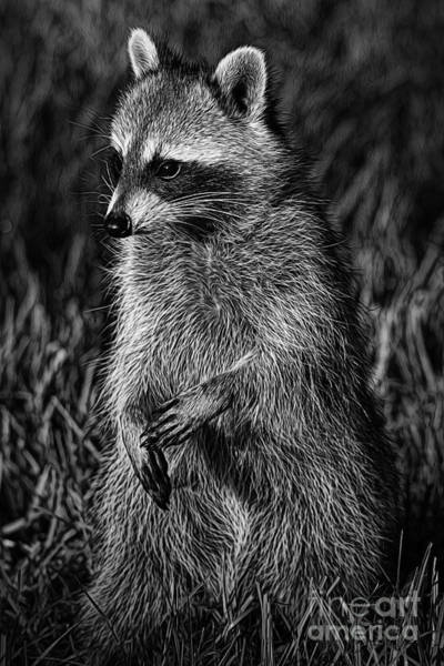 Raccoon Photograph - Mama Raccoon by Deborah Benoit