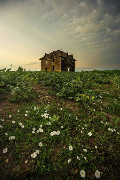 Wall Art - Photograph - Mammatus And Flowers  by Aaron J Groen