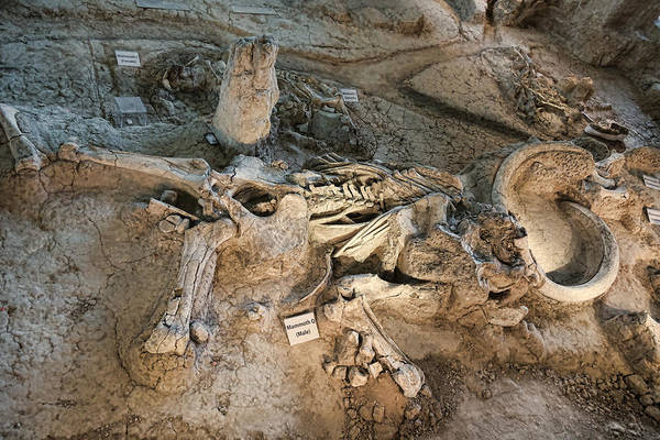 Wall Art - Photograph - Mammoth Dig by Stephen Stookey