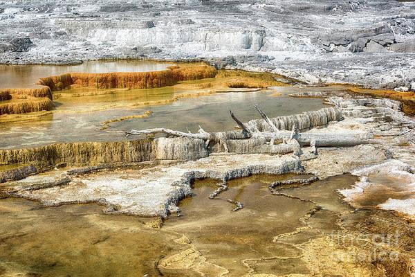 Photograph - Mammoth Springs by Paul Quinn