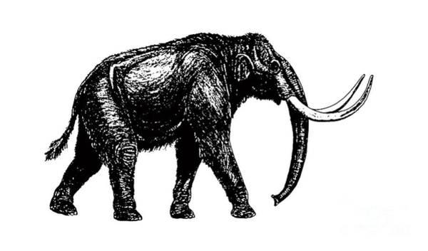 Sweatshirt Wall Art - Digital Art - Mammoth Tee by Edward Fielding