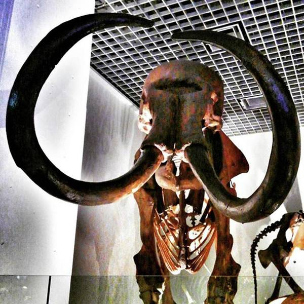 Strong Wall Art - Photograph - Mammoth Ure-p by Nori Strong