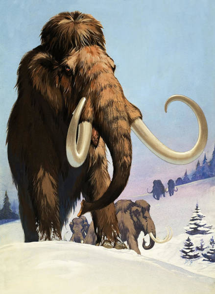 Tundra Wall Art - Painting - Mammoths From The Ice Age by Angus McBride