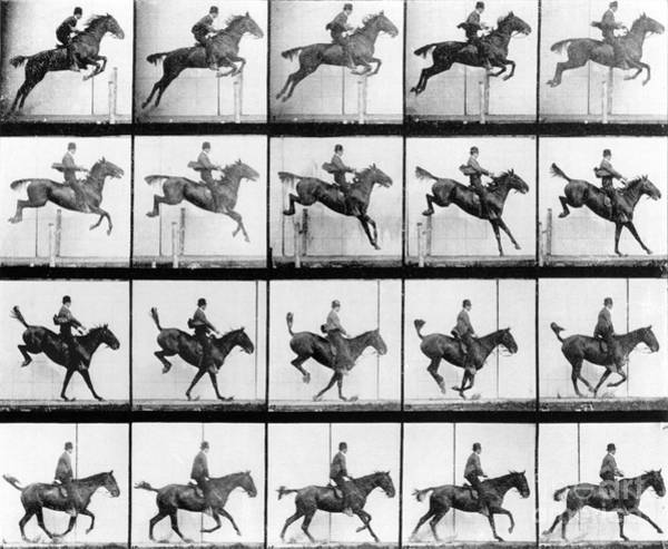 Dressage Wall Art - Photograph - Man And Horse Jumping by Eadweard Muybridge