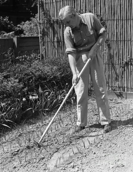 Elder Care Photograph - Man Gardening, C.1940s by H. Armstrong Roberts/ClassicStock