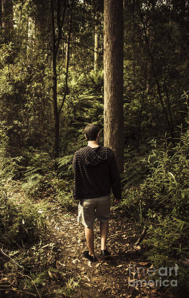 Gully Photograph - Man On Bush Walk Through North Tasmanian Forest by Jorgo Photography - Wall Art Gallery
