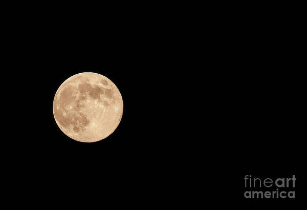 Photograph - Harvest Moon by Dale Powell