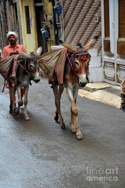 Photograph - Man Transports Goods On Mules In Narrow Streets Lahore Pakistan by Imran Ahmed