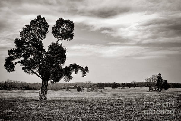 Battle Field Photograph - Manassas Memories by Olivier Le Queinec