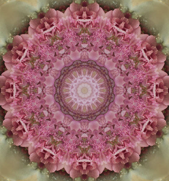 Photograph - Mandala In Pink Colors by Jaroslaw Blaminsky