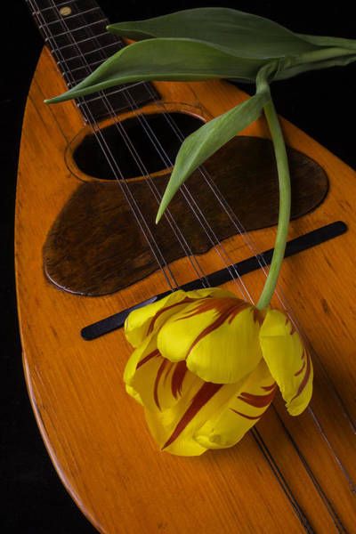 Hand Made Wall Art - Photograph - Mandolin With Red And Yellow Tulip by Garry Gay