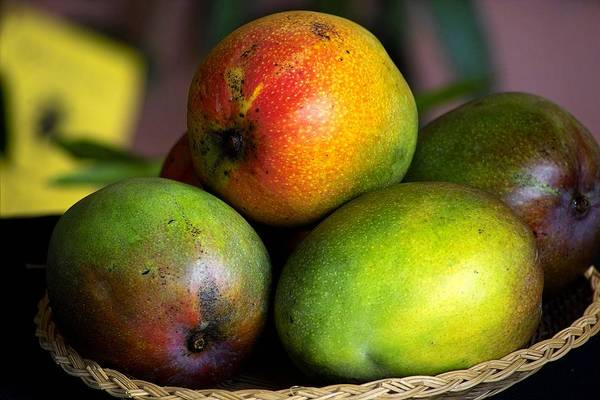 Photograph - Mangos by Gary Dean Mercer Clark