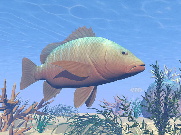 Dive Bar Digital Art - Mangrove Fish Underwater - 3d Render by Elenarts - Elena Duvernay Digital Art