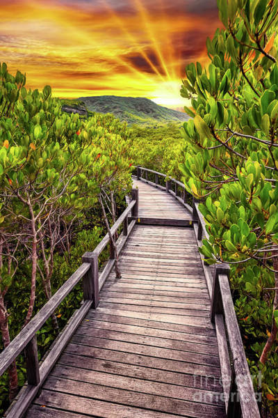 Wall Art - Photograph - Mangrove Forest Sunset by Adrian Evans