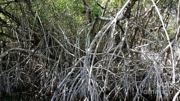 Mangroves Digital Art - Mangrove Mess by Mary Frances
