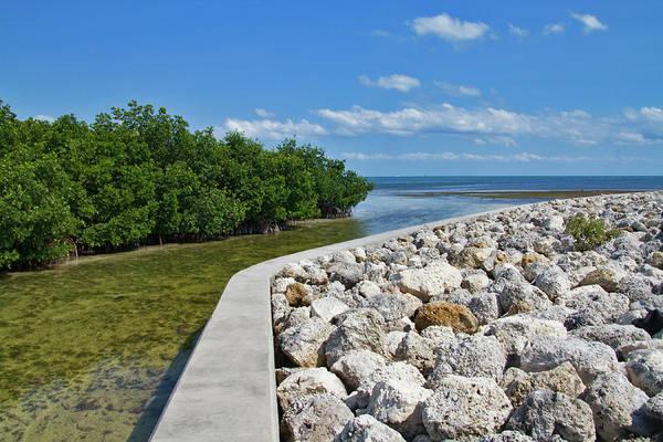 Photograph - Mangroves Rocks And Ocean by Bob Slitzan