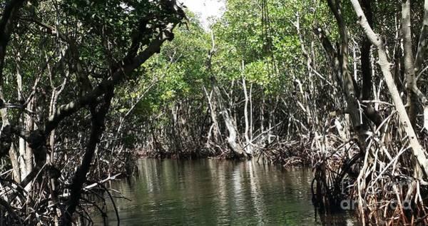 Mangroves Digital Art - Mangroves2 by Mary Frances