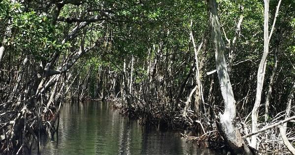 Mangroves Digital Art - Mangroves3 by Mary Frances
