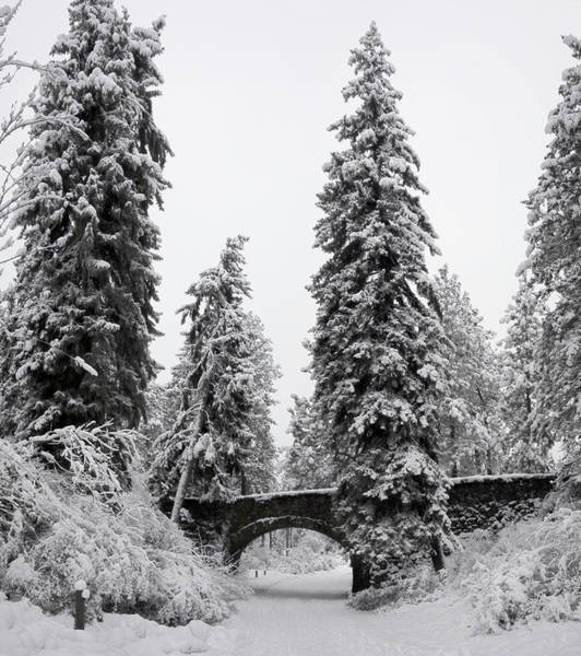 Wall Art - Photograph - Manito Park Bridge In Winter by Daniel Hagerman