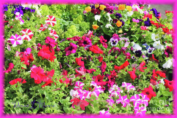Digital Art - Petunias And Pansies by Donna L Munro