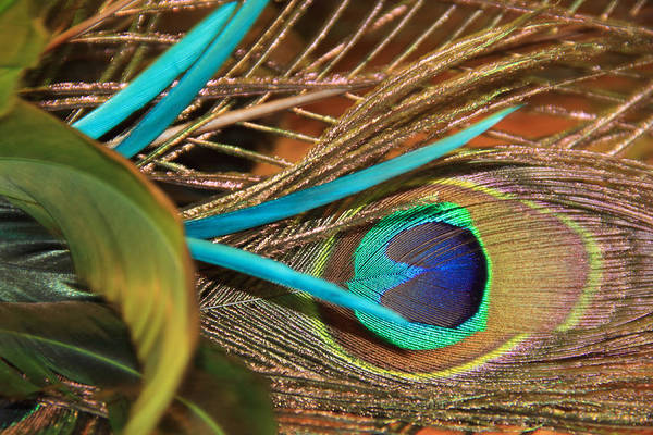 Photograph - Many Feathers by Angela Murdock