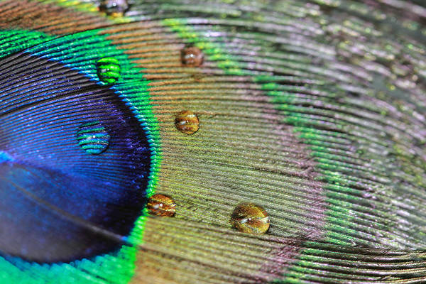 Photograph - Many Water Drops by Angela Murdock