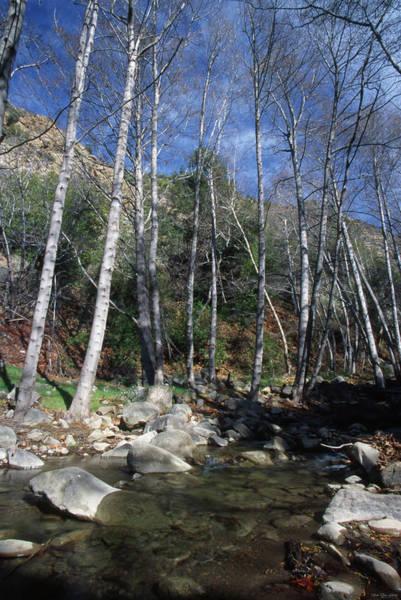 San Rafael Wilderness Photograph - Manzana River - San Rafael Wilderness by Soli Deo Gloria Wilderness And Wildlife Photography