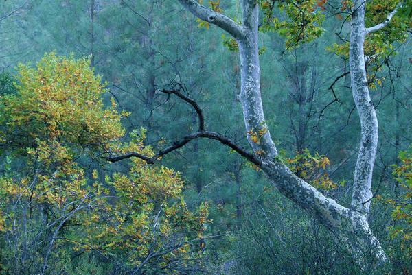 San Rafael Wilderness Photograph - Manzana Trail - San Rafael Wilderness by Soli Deo Gloria Wilderness And Wildlife Photography
