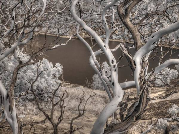Wall Art - Photograph - Manzanita Hetch Hetchy by Jane Linders