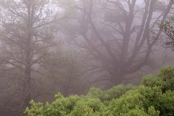 Wall Art - Photograph - Manzanita In The Mist by Soli Deo Gloria Wilderness And Wildlife Photography